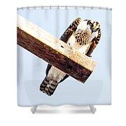 A Osprey Shower Curtain