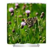 A Painted Lady Shower Curtain