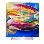 A Painted Tulip. Shower Curtain