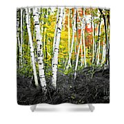 A Painting Autumn Birch Grove Shower Curtain