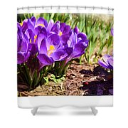 A Painting Crocus Panoramic Shower Curtain