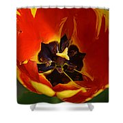 A Painting Red Tulip Shower Curtain