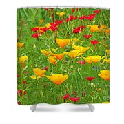 A Painting Tuscan Poppies Shower Curtain