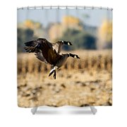 A Pair Of Aleutians Landing Shower Curtain