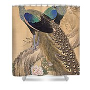 A Pair Of Peacocks In Spring Shower Curtain
