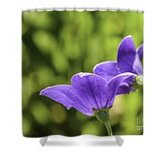A Pair Of Purple Balloon Flowers Shower Curtain