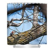 A Pair Of Red-bellied Woodpeckers Shower Curtain
