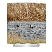 A Pair Of Redheads  Shower Curtain