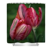 A Pair Of Tulips In The Rain Shower Curtain