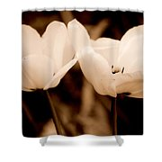 A Pair Of Tulips Shower Curtain