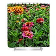 A Pair Of Yellow Zinnias 02 Shower Curtain