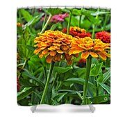 A Pair Of Yellow Zinnias 03 Shower Curtain