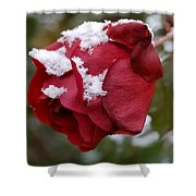 A Passing Unrequited - Rose In Winter Shower Curtain