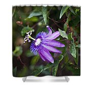 A Passion For Flowers Db Shower Curtain