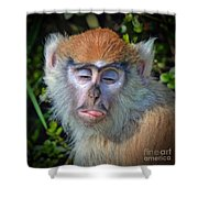 A Patas Baby Monkey Behaving Badly Shower Curtain