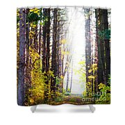 A Path In The Pines Shower Curtain