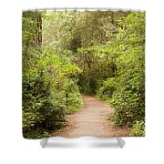 A Path To The Redwoods Shower Curtain