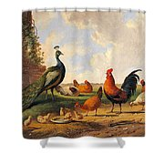A Peacock And Chickens In A Landscape  Shower Curtain
