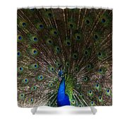 A Peacock's Feathers Shower Curtain