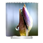 A Pearl In My Mouth - Water Droplets Shower Curtain
