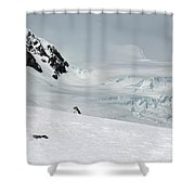 A Penguin's World Shower Curtain