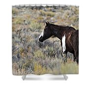 A Penny For Your Thoughts Shower Curtain