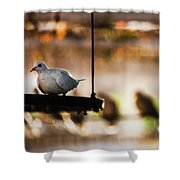 A Pigeon In A Cage Shower Curtain