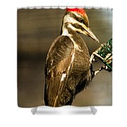A Pileated With Intent Shower Curtain