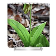A Pink Ladys Slipper Orchid Prepares Shower Curtain