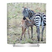 A Plains Zebra, Equus Quagga, Nursing Shower Curtain