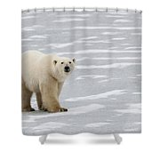 A Polar Bear On Hudson Bay Shower Curtain