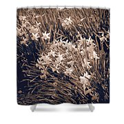 Clusters Of Daffodils In Sepia Shower Curtain