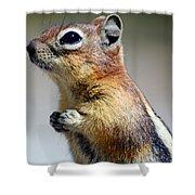 A Profile In Chipmunk Shower Curtain