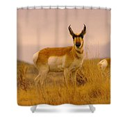 A Pronghorn Gazes Shower Curtain