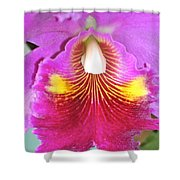 A Purple Cattelaya  Orchid Shower Curtain