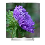 A Touch Of Violet   Shower Curtain