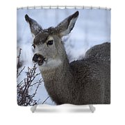 A Quick Nibble Shower Curtain