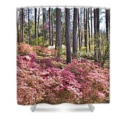 A Quiet Spot In The Woods Shower Curtain