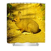 A Rabbit In My Path Shower Curtain