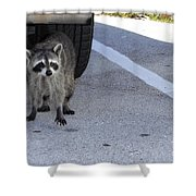 A Raccoon In Florida Shower Curtain