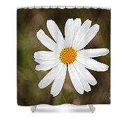 A Rain Spattered Daisy Shower Curtain