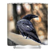 A Raven In Winter Shower Curtain by Skye Ryan-Evans