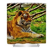 A Real Detroit Tiger Shower Curtain