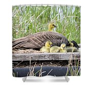A Real Mother Goose Shower Curtain