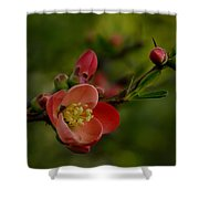 A Red Flower Shower Curtain