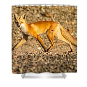 A Red Fox Shower Curtain
