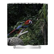 A Red Green And Blue Macaw On A Branch In The Jurong Bird Park Shower Curtain