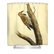A Red Moustached Woodpecker Shower Curtain by Philip Ralley