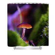 A Red Mushroom  Shower Curtain