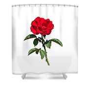 A Red Rose On White Shower Curtain